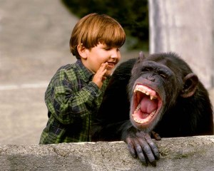 laughing_chimp