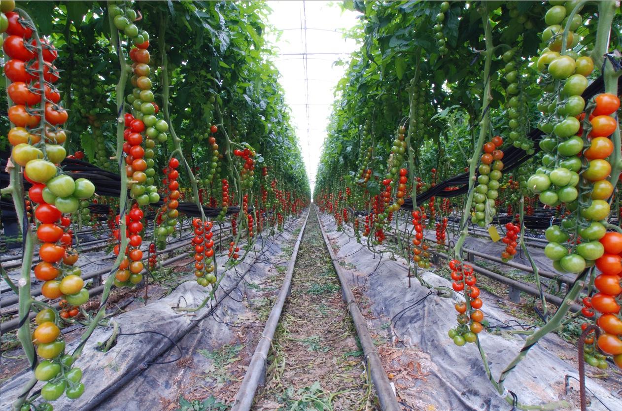 Home Vegetable Garden Design Ideas - Home vegetable garden design ideas