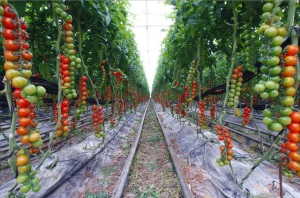 vegetable-gardening-garden-tips-garden-guide-1262x834